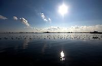 Vista del mare interno al porto di brindisi in piano pomeriggio di sole. Visibili anche le coltivazioni di frutti di mare