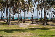 palm trees coastline Bequia Port Elizabeth, Bequia, St Vincent and The Grenadines, Caribbean, Admiralty Bay West Indies
