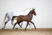 Nayano<br /> Prinsjesdagveiling 2018<br /> © DigiShots