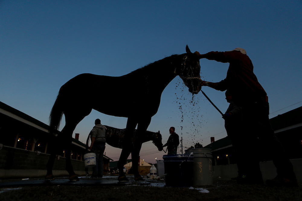 LOUISVILLE, KY - MAY 06: A horse is washed in the barn area during morning training for the Kentucky Derby at Churchill Downs on May 06, 2016 in Louisville, Kentucky. (Photo by Michael Reaves/Getty Images)