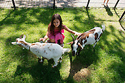In Dordrecht verzorgt een meisje de dieren in de kinderboerderij van Natuur- en milieucentrum Weizigt.<br /> <br /> In Dordrecht a girl is taking care of the animals at the petting zoo Weizigt.