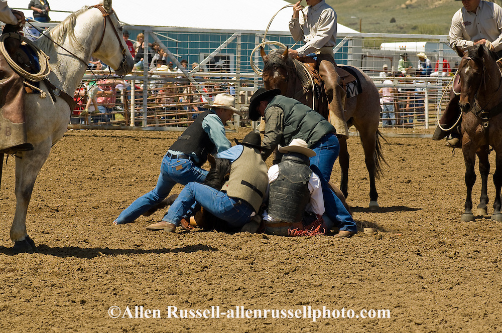 Rodeo, Bareback Bronc rider is rescued by chute boss Pat Linger and crew after bronc flips, Miles City Bucking Horse Sale, Montana.