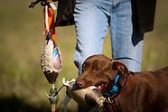 Gun Dog Training (Retreivers)