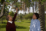 Helmy Abouleish, (l) Managing Director of the leading Egyptian Organic foods and products producer, Sekem Group, discusses agriculture with his father and Sekem founder, Dr. Ibrahim Abouleish, on the lush grounds of the Sekem farm Nov 4, 2008 in Belbeis, Egypt. Dr. Ibrahim Abouleish founded the project in 1977 on what was then barren desert, and since has grown it into a lush oasis ecompassing several farms, production plants, schools and even a local medical facility.