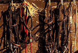 Various reins and ropes hanging on a wall