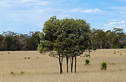 Trees, Queensland, Australia