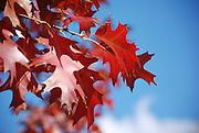 Autumn coloured leaves