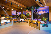 Wildlife displays at the Jackson Hole Visitor Center, Jackson Hole, Wyoming USA