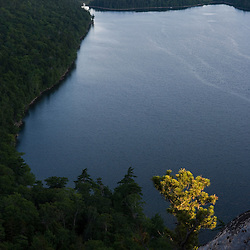 A pitch pine, pinus rigida, grows on a cliff on South Bubble Mountain in Maine's Acadia National Park.