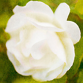 Creams & Pale Yellows