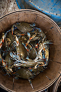 Baskets of Blue Crabs on the Island Lady | October 11, 2015