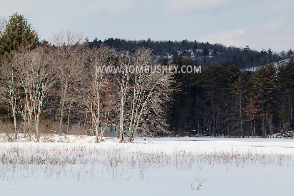 Mamakating, New York - Sunlight and shadows at the Bashakill Wildlife Management Area on March 8, 2015.