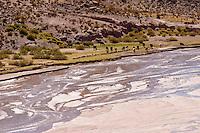 LLAMAS (Lama glama) Y RIO EN LOS ALREDEDORES DE SUSQUES, PROV. DE JUJUY, ARGENTINA