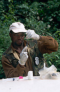 A WWF veterinarian, Michael Kwong, is preparing an aneasthetic for darting a bongo, the forest antelope.
