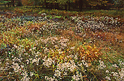 Allegheny National Forest, PA landscapes, fall wild flowers, wilderness