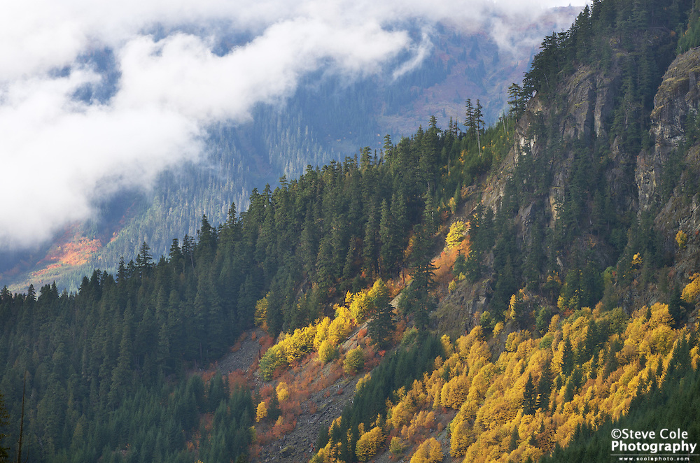 Fall Patch - Wells Creek Valley