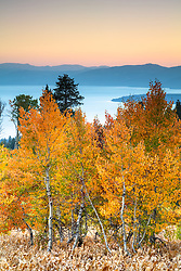 """Aspens Above Lake Tahoe 12"" - Photograph of yellow and orange aspen trees in the Fall at a grove above Lake Tahoe."