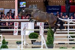 021, Romeo van de Zeshoek<br /> BWP Hengstenkeuring -  Lier 2020<br /> © Hippo Foto - Dirk Caremans<br />  18/01/2020