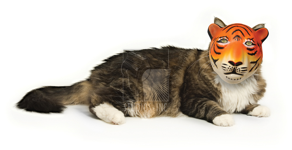 House cat on a white background wearing a tiger mask
