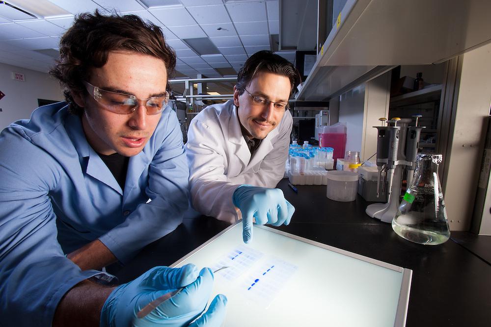 Assistant Professor Justin M. Holub, right, Biochemistry Research Facility Ohio University. © Ohio University / Photo by Jonathan Adams