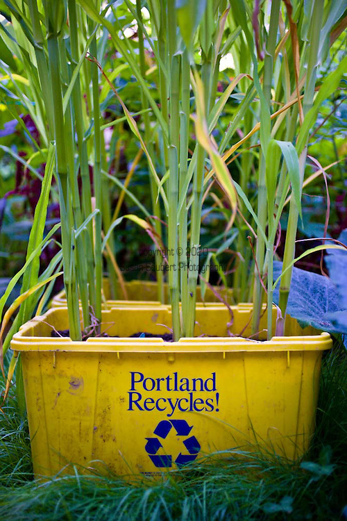 Recycled recycling bins serve as a place to grow corn