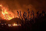 August 16, 2016 - Fire burns off of Highway 138 as the Blue Cut Fire rages through San Bernardino County Tuesday. The fire has scorched at least 30,000 acres and forced 82,000 people to evacuate their homes in San Bernardino County. <br /> ©Exclusivepix Media