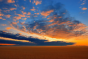 Sunrise over grain crop<br /> Fairview<br /> Alberta<br /> Canada
