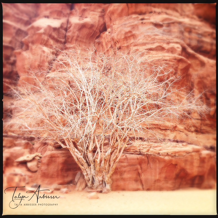 Leafless in color - Wadi Rum, Jordan