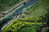 Marcianise, Italia - 30 aprile 2010. Una mandria di bufale si abbevera all'interno di uno dei canali dei Regi Lagni. L'acqua che bevono le bufale è altamente tossica ed inquinata. I Regi Lagni sono un sistema di canali realizzati durante il regno borbonico per controllare le acque e bonificare zone paludose..Ph. Roberto Salomone Ag. Controluce.ITALY - Buffalo drink toxic water from Regi Lagni channels on April 30, 2010. Regi Lagni are channels built by Bourbon family during their reign in Naples in order to drain the water.