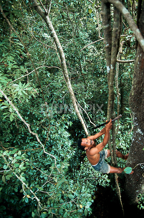 Lead poacher-turned-guide Buce Makatita joining me in a treetop platform we rigged to photograph a nesting hornbill.