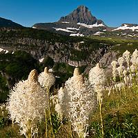 glacier national park, bear grass, reynolds mountain
