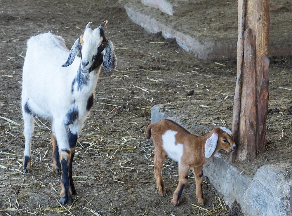 Kids at Pacheco Ranch & Achandinha Cheese Company
