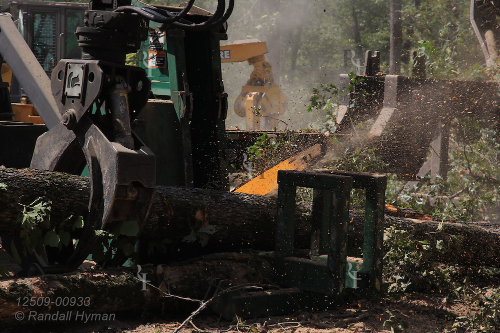 Chain saw rips tree in half during ultra-mechanized clearcutting of an Ozarks woodland at Missouri In Woods Logging Demo near Viburnum, Missouri.