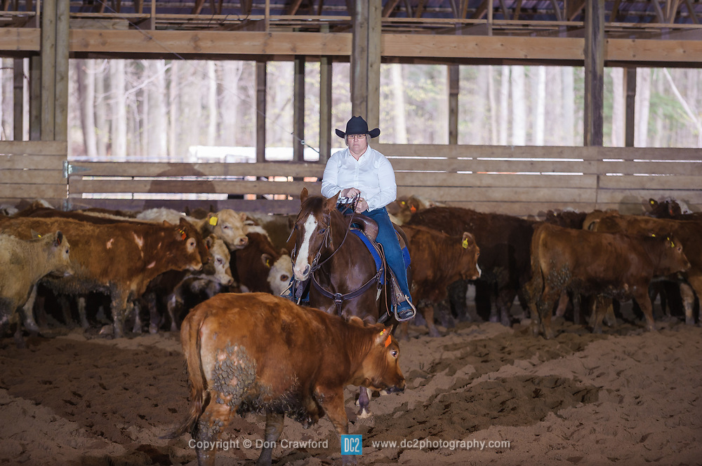 April 29 2017 - Minshall Farm Cutting 1, held at Minshall Farms, Hillsburgh Ontario. The event was put on by the Ontario Cutting Horse Association. Riding in the Ranch Class is Nancy Poole on Miss Smart Freckles owned by the rider.