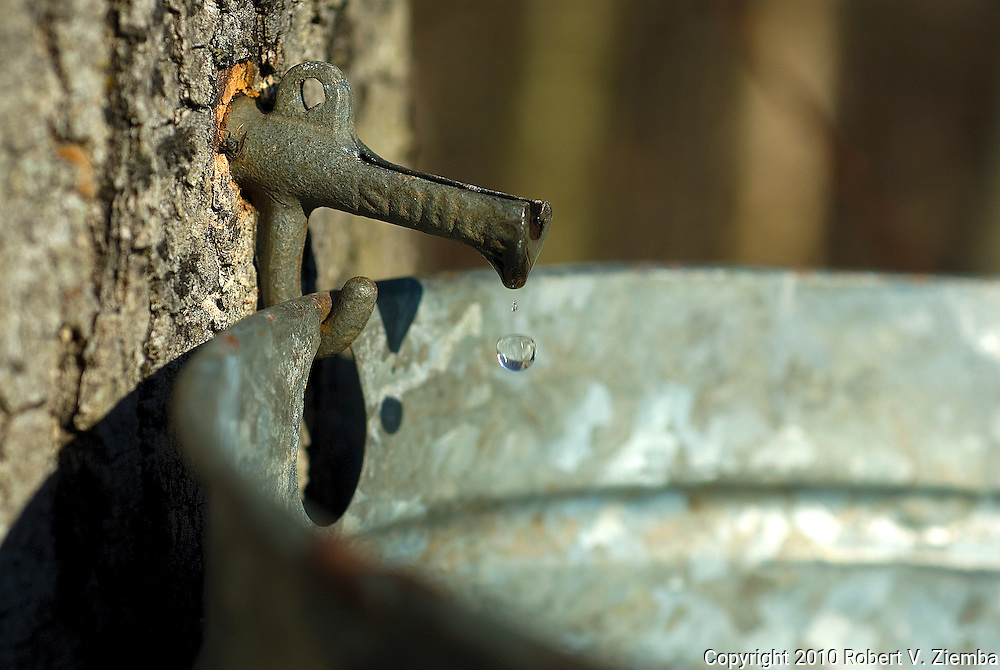 """Soul""-Maple sap dripping in a bucket."