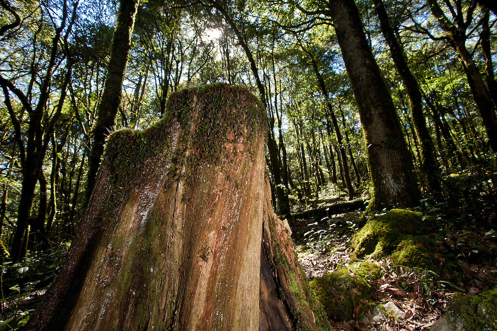 Tree stump in forest of Sierra Gorda, Mexico
