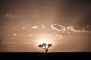 Sunrise in the Masai Mara National Reserve, Kenya, Africa