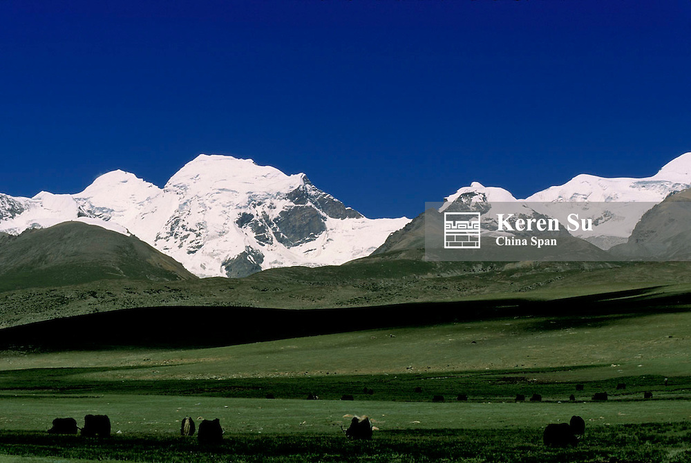 Grassland with Mt. Nian Qing, Tibet, China