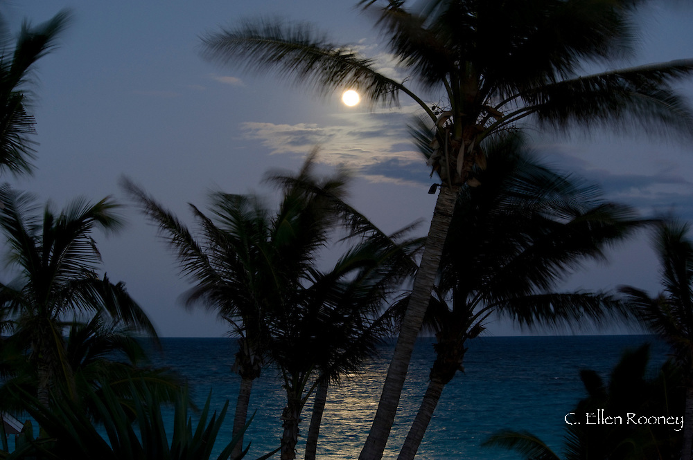 A full moon and palm trees over the sea in Harbour Island, Eleuthera,The Bahamas