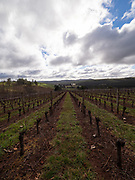 Estate Vineyard at Clover Hill, Pipers Brook