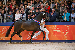 359, Igor<br /> Kampioenskeuring Dressuurhengsten<br /> KWPN Hengstenkeuring - 's Hertogenbosch 2016<br /> © Hippo Foto - Dirk Caremans<br /> 06/02/16