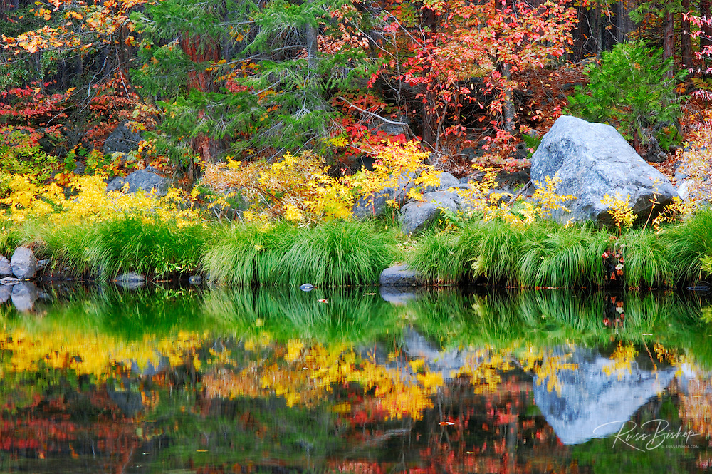 Fall color along the Merced River, Yosemite Valley, Yosemite National Park, California