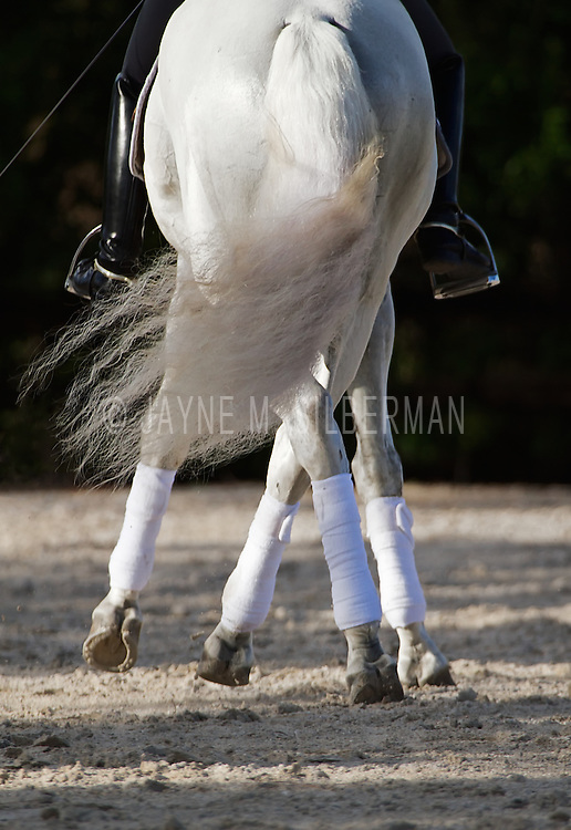 Rear view of Dressage Half-Pass