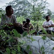 Guillermo Pangoa ha contrattato la famiglia di Pepe Guerrera, indigeni &quot;ashainka&quot;, per raccogliere le foglie di coca dal suo appezzamento di terra che si trova vicino a Pichari, nel Vraem. Qui masticano foglie di coca prima del lavoro per darsi energia.<br /> <br /> Guillermo Pangoa contracted family of Pepe Guerrera, indigenous &quot;ashainka&quot; to collect coca leaves from his plot of land located near Pichari in Vraem. Here they chew coca leaves before work.