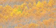 Fall color on Monarch Pass, Colorado.