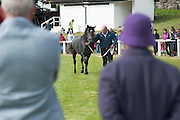 21/09/2014 Paddy Kerns  with Slieve Bloom Buster  at the Connemara Pony Show 2014 in Clifden Co. Galway. Photo:Andrew Downes