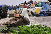 Great Pacific Garbage Patch, also known as the Pacific Trash Vortex killing up to one million seabirds and 100,000 marine mammals and sea turtles die each year from eating plastic.