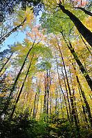 Tahquamenon Falls State Park,<br /> Michigan's Upper Peninsula