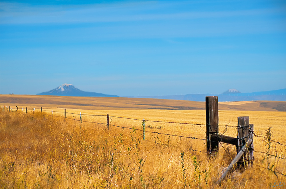 This is an image from Eastern Oregon, with two Volcanic mountains in the distance. Barely visible on a ridge in the right background area is a windmill farm. The gold of the grasses contract nicly with the blue of the sky and the hazy hills.