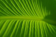 plants bugs